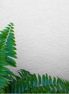 How To Keep Your Northampton County Stucco Siding Clean