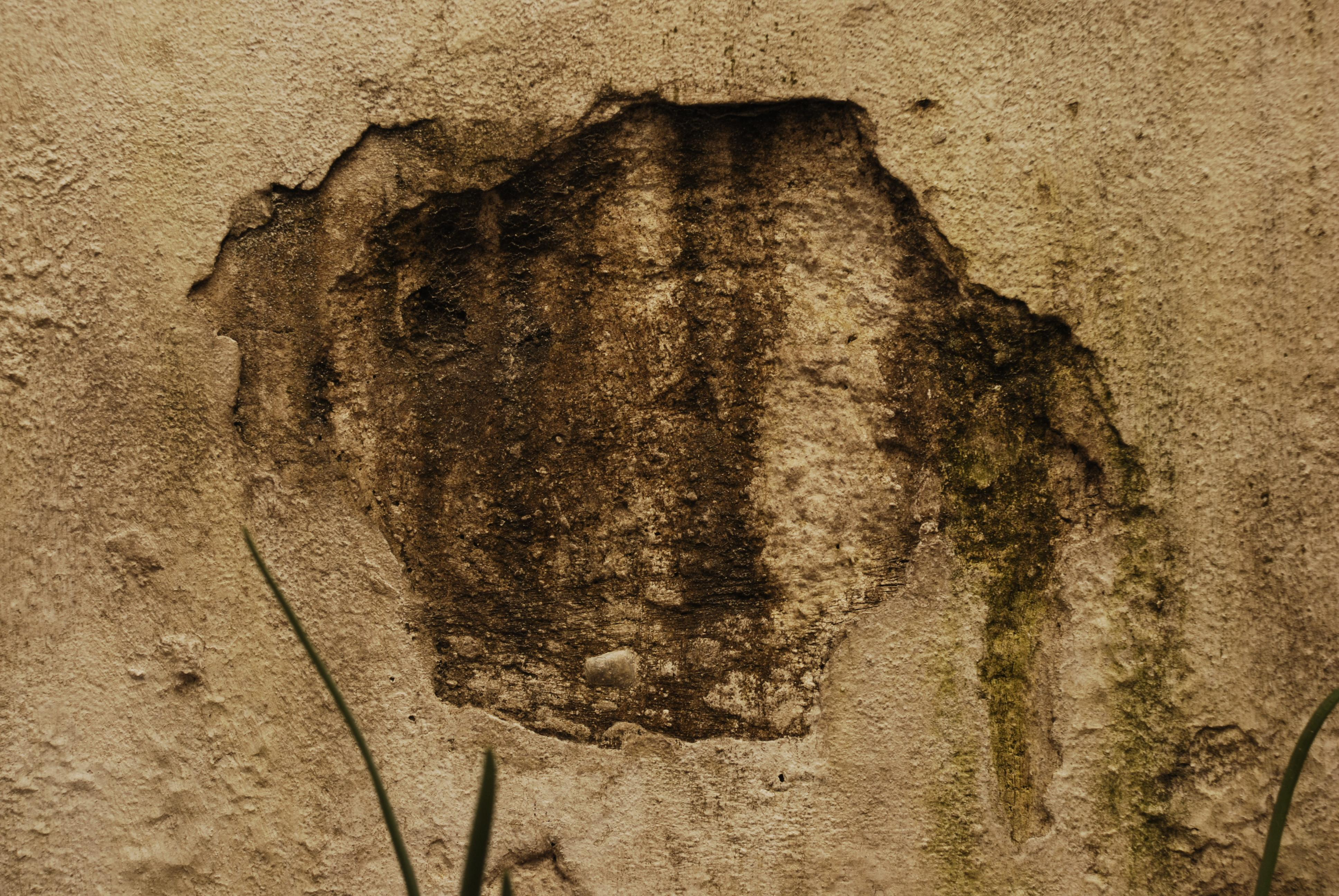 How to Prevent Stucco Mold Growth - Ai Restoration