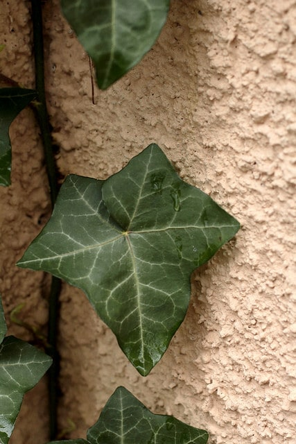How to Remove Vines From Stucco